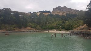 St Thomas of Canterbury College students swimming in the sea
